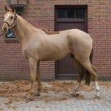 Scheermachine paard