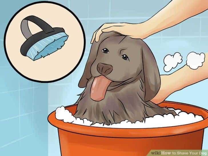 Hoe scheer je een hond