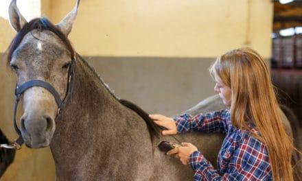 Hoe scheer je een paard? Stappenplan.