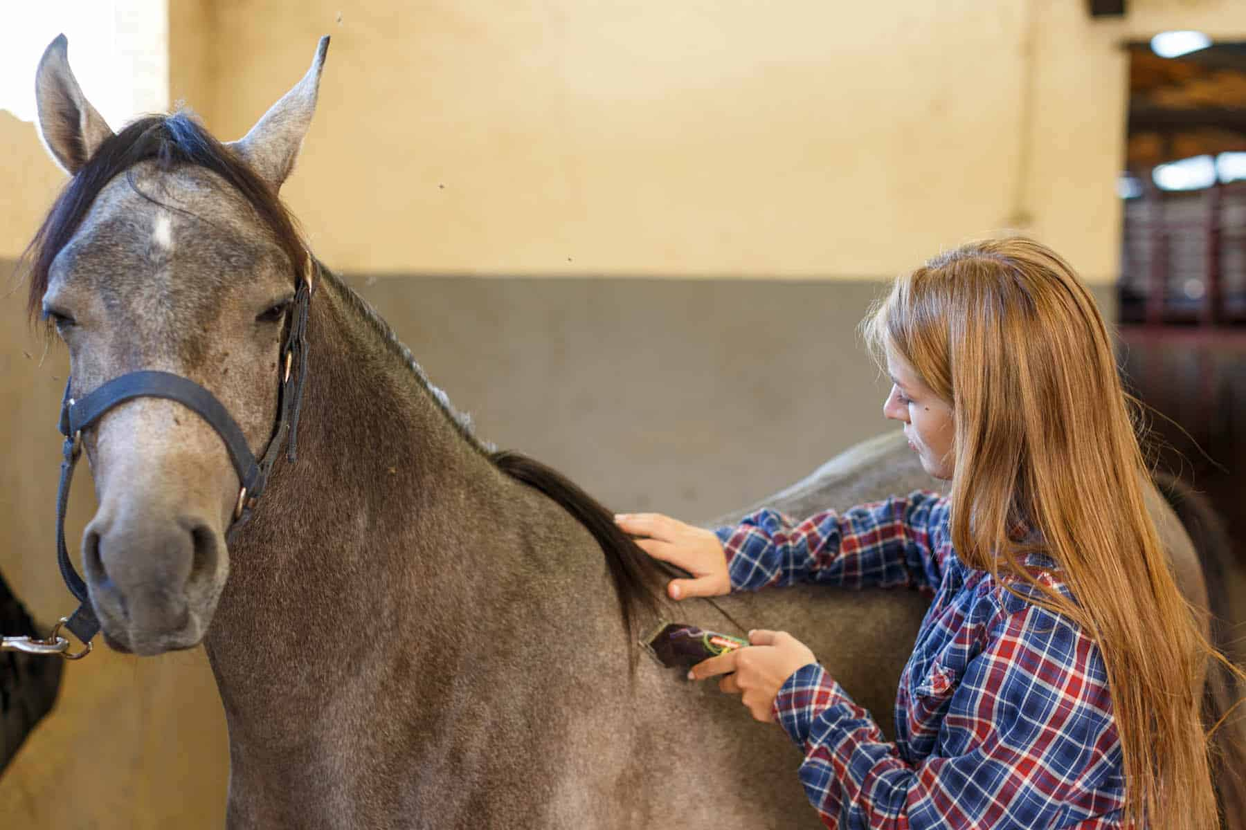 hoe scheer je een paard