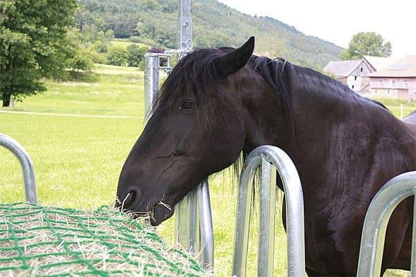 Hooinet voor paarden
